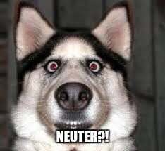 NEUTER?! | made w/ Imgflip meme maker