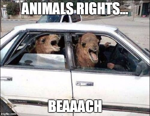 Quit Hatin |  ANIMALS RIGHTS... BEAAACH | image tagged in memes,quit hatin | made w/ Imgflip meme maker