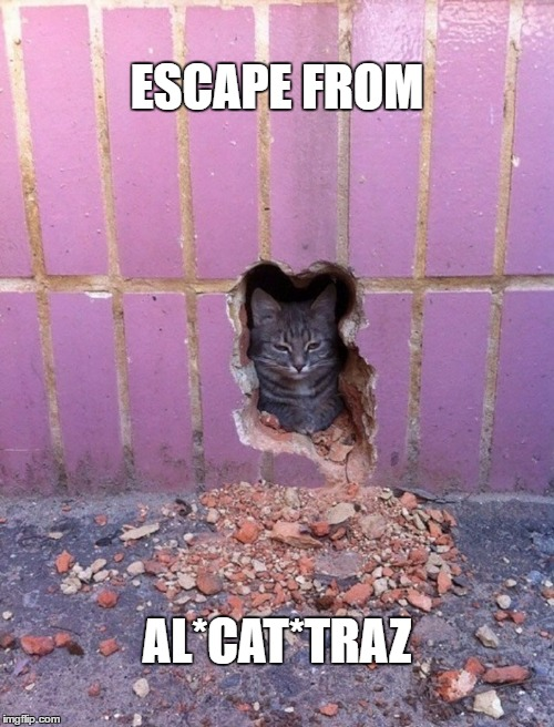 Escape from Al*cat*traz | ESCAPE FROM AL*CAT*TRAZ | image tagged in funny cat,escape from alcatraz | made w/ Imgflip meme maker