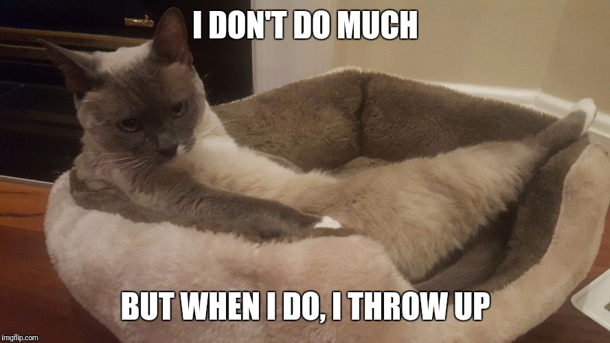 Kokstercat | I DON'T DO MUCH BUT WHEN I DO, I THROW UP | image tagged in kokstercat | made w/ Imgflip meme maker