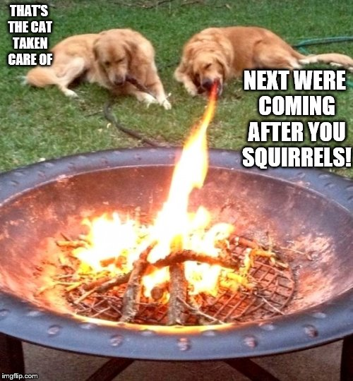 when someone tells you to get rid of the trash | THAT'S THE CAT TAKEN CARE OF NEXT WERE COMING AFTER YOU SQUIRRELS! | image tagged in trash,fire,dog,firebreathing dog | made w/ Imgflip meme maker