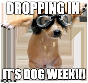DROPPING IN IT'S DOG WEEK!!! | image tagged in pilot dog,dog week | made w/ Imgflip meme maker