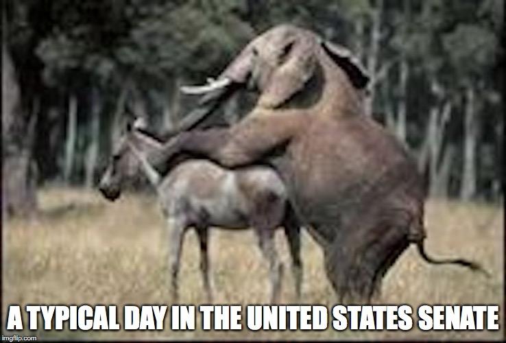 donkeys fucking