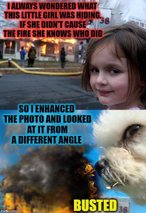"""Disaster Dog"" Thought we agreed no cats.... (Dog Week) 