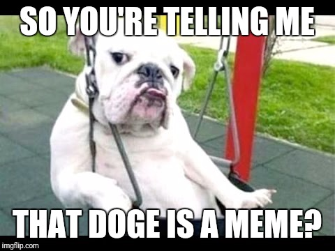 Skeptical dog | SO YOU'RE TELLING ME THAT DOGE IS A MEME? | image tagged in skeptical dog | made w/ Imgflip meme maker