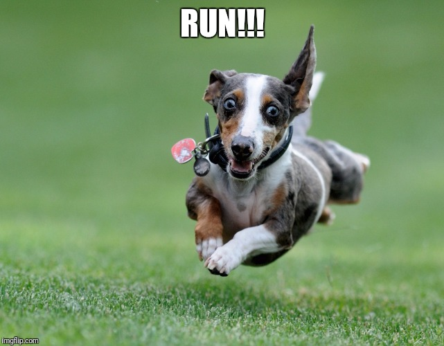 Excited dog | RUN!!! | image tagged in excited dog | made w/ Imgflip meme maker