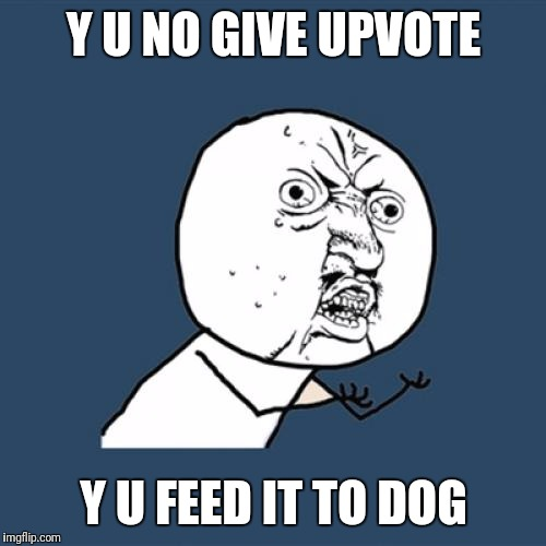 Y U No Meme | Y U NO GIVE UPVOTE Y U FEED IT TO DOG | image tagged in memes,y u no | made w/ Imgflip meme maker
