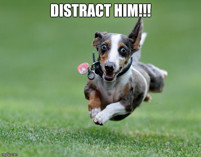 Excited dog | DISTRACT HIM!!! | image tagged in excited dog | made w/ Imgflip meme maker