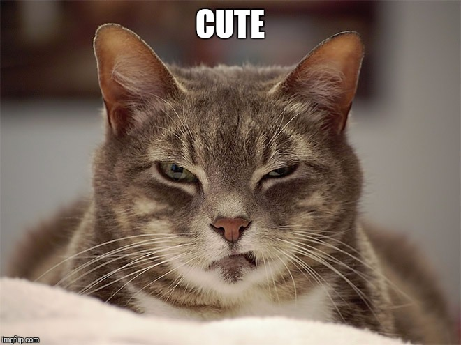 Sarcasm Cat | CUTE | image tagged in sarcasm cat | made w/ Imgflip meme maker