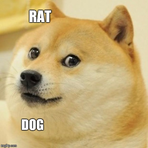 Doge Meme | RAT DOG | image tagged in memes,doge | made w/ Imgflip meme maker