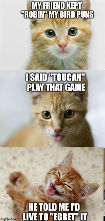 "Bad Pun Cat | MY FRIEND KEPT ""ROBIN"" MY BIRD PUNS HE TOLD ME I'D LIVE TO ""EGRET"" IT I SAID ""TOUCAN"" PLAY THAT GAME 