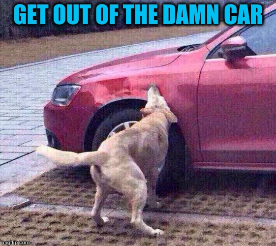 GET OUT OF THE DAMN CAR | made w/ Imgflip meme maker
