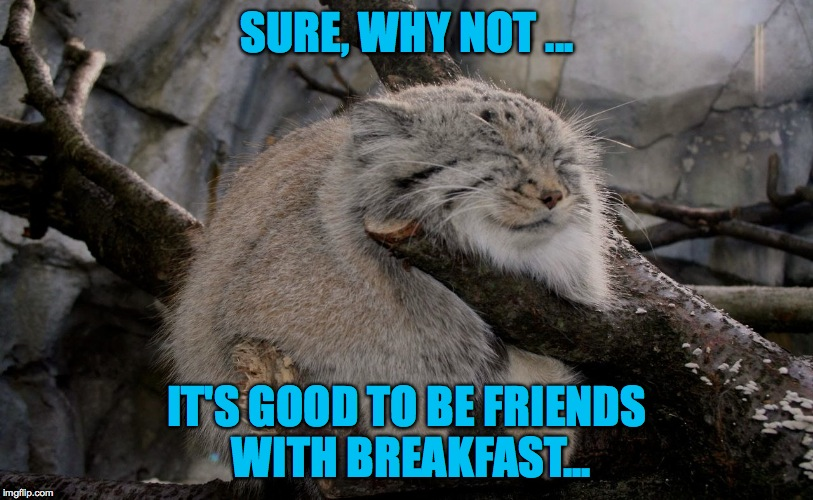 SURE, WHY NOT ... IT'S GOOD TO BE FRIENDS WITH BREAKFAST... | made w/ Imgflip meme maker