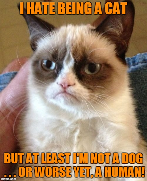 Grumpy Cat Meme | I HATE BEING A CAT BUT AT LEAST I'M NOT A DOG . . . OR WORSE YET, A HUMAN! | image tagged in memes,grumpy cat | made w/ Imgflip meme maker