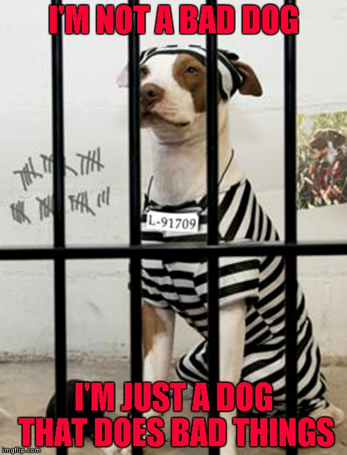 Don't do the crime if you can't do the time! Dog Week ... A Tiger.Leo Event | I'M NOT A BAD DOG I'M JUST A DOG THAT DOES BAD THINGS | image tagged in dog in prison,dogs,memes,dog week,animals,locked up | made w/ Imgflip meme maker