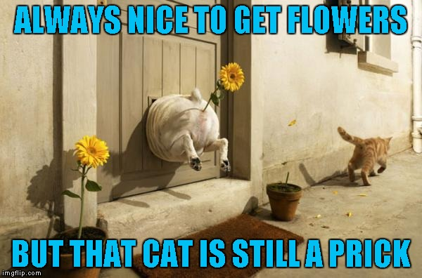 Flowers make everything better!!! Dog Week... A Tiger.Leo Event | ALWAYS NICE TO GET FLOWERS BUT THAT CAT IS STILL A PRICK | image tagged in flower pot dog,memes,dogs,funny,dog week,animals | made w/ Imgflip meme maker