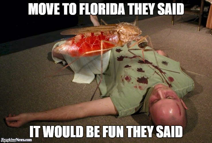 Meanwhile in Florida | MOVE TO FLORIDA THEY SAID IT WOULD BE FUN THEY SAID | image tagged in meanwhile in florida,mosquito | made w/ Imgflip meme maker