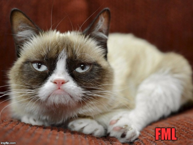 Sad Cat | FML | image tagged in sad cat | made w/ Imgflip meme maker