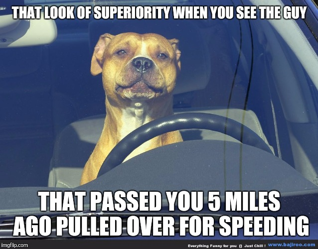 You were already 8 MPH over the speed limit when he did it. Dog Seek. A Tiger.Leo event | THAT LOOK OF SUPERIORITY WHEN YOU SEE THE GUY THAT PASSED YOU 5 MILES AGO PULLED OVER FOR SPEEDING | image tagged in dog week,speeding ticket,dog driving | made w/ Imgflip meme maker