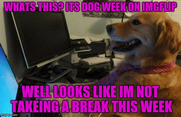 Im Going To Be Busy This Week (Dog Week A Tiger.leo Event) | WHATS THIS? ITS DOG WEEK ON IMGFLIP WELL LOOKS LIKE IM NOT TAKEING A BREAK THIS WEEK | image tagged in dogs,dog week,tigerleo | made w/ Imgflip meme maker