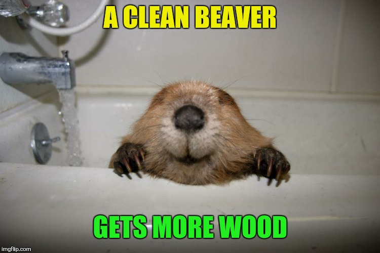 A CLEAN BEAVER GETS MORE WOOD | made w/ Imgflip meme maker