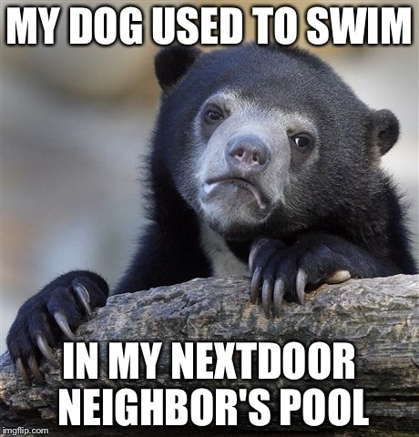 Confession Bear Meme | MY DOG USED TO SWIM IN MY NEXTDOOR NEIGHBOR'S POOL | image tagged in memes,confession bear | made w/ Imgflip meme maker