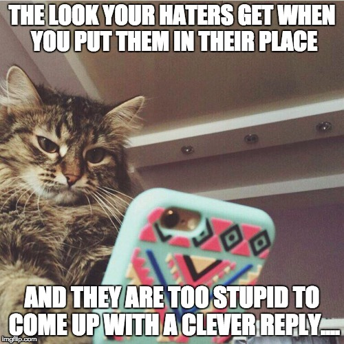 Angry Haters | THE LOOK YOUR HATERS GET WHEN YOU PUT THEM IN THEIR PLACE AND THEY ARE TOO STUPID TO COME UP WITH A CLEVER REPLY.... | image tagged in wtf cat,haters,haters gonna hate,trolls,internet trolls,cats | made w/ Imgflip meme maker