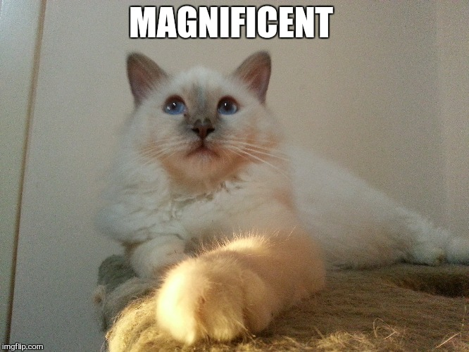 MAGNIFICENT | made w/ Imgflip meme maker