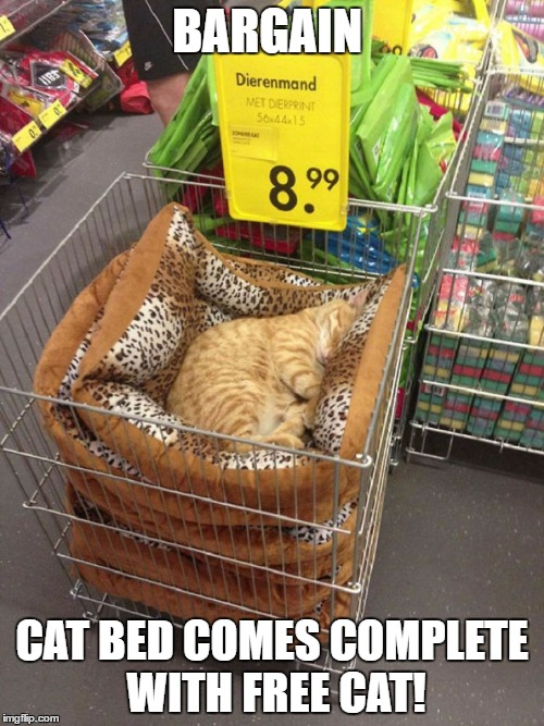 Buy a cat bed, get a free cat! | BARGAIN CAT BED COMES COMPLETE WITH FREE CAT! | image tagged in bargain,buy cat bed get free cat,funny cat | made w/ Imgflip meme maker