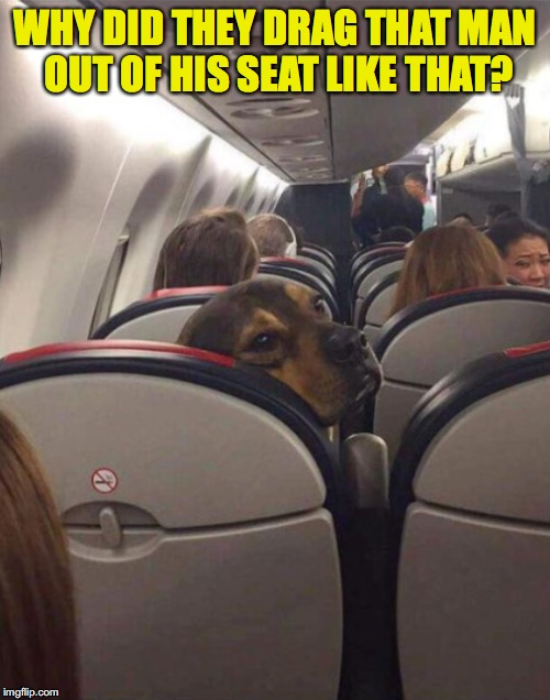 Frequent Flyer Dog | WHY DID THEY DRAG THAT MAN OUT OF HIS SEAT LIKE THAT? | image tagged in united airlines passenger removed,therapy | made w/ Imgflip meme maker