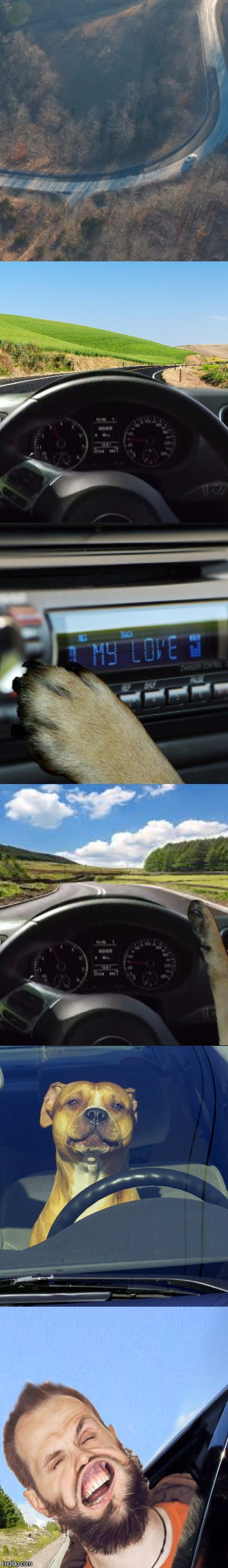 WANNA GO FOR A RIDE? | . | image tagged in dog week,drive,funny | made w/ Imgflip meme maker