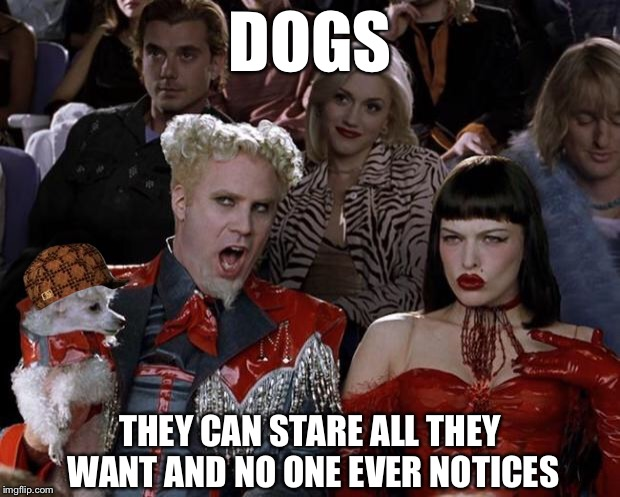 Mugatu So Hot Right Now Meme | DOGS THEY CAN STARE ALL THEY WANT AND NO ONE EVER NOTICES | image tagged in memes,mugatu so hot right now,scumbag,big tits,boobs | made w/ Imgflip meme maker