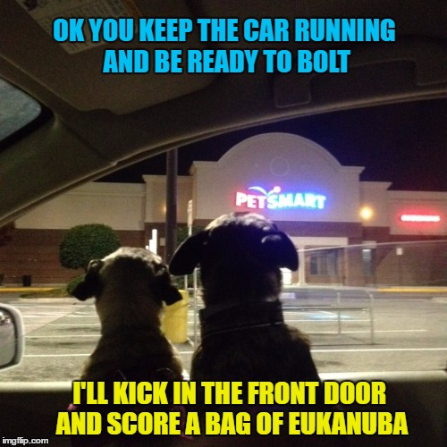 Dog Week -Makin' a break for it! - A Tiger.Leo Event | OK YOU KEEP THE CAR RUNNING AND BE READY TO BOLT I'LL KICK IN THE FRONT DOOR AND SCORE A BAG OF EUKANUBA | image tagged in memes,dog week,pugs,pets,pet store,robbery | made w/ Imgflip meme maker