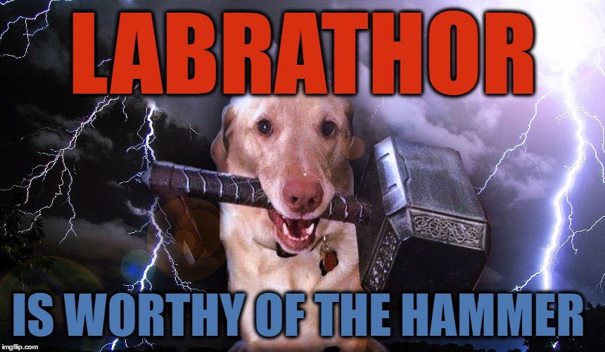 Thor Dog AKA Labrathor - Dog Week | LABRATHOR IS WORTHY OF THE HAMMER | image tagged in thor dog,dog week,thor,dogs,animals,hammer | made w/ Imgflip meme maker