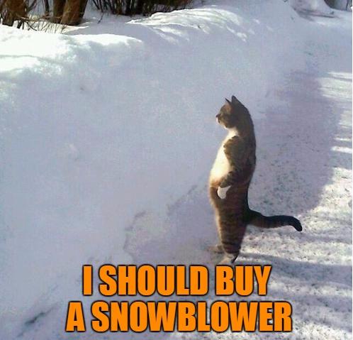 I should buy a snowblower | I SHOULD BUY A SNOWBLOWER | image tagged in cats,memes,animals,snow,snowblower | made w/ Imgflip meme maker