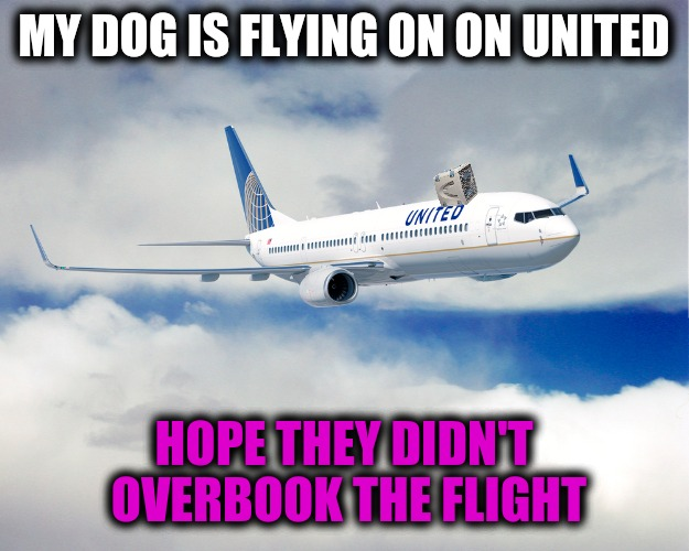 Dog Week meets United Airlines  | MY DOG IS FLYING ON ON UNITED HOPE THEY DIDN'T OVERBOOK THE FLIGHT | image tagged in dog week,united airlines,overbooked | made w/ Imgflip meme maker