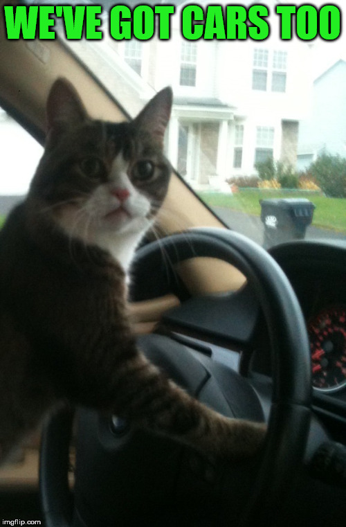 JoJo The Driving Cat | WE'VE GOT CARS TOO | image tagged in jojo the driving cat | made w/ Imgflip meme maker