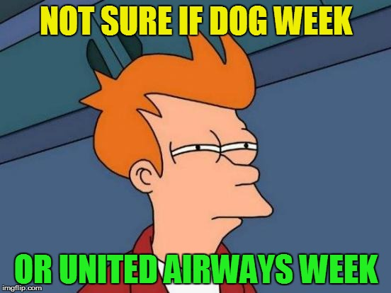 Was what I though when I saw the front page today | NOT SURE IF DOG WEEK OR UNITED AIRWAYS WEEK | image tagged in memes,futurama fry,united airlines,dog week | made w/ Imgflip meme maker