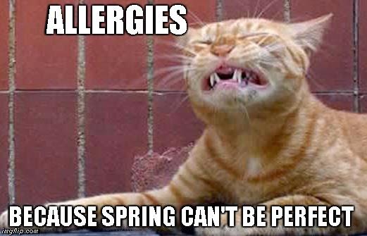 1n5lsq allergies imgflip