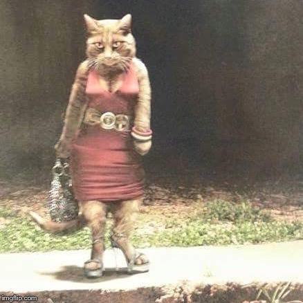 Hooker Cat Funny