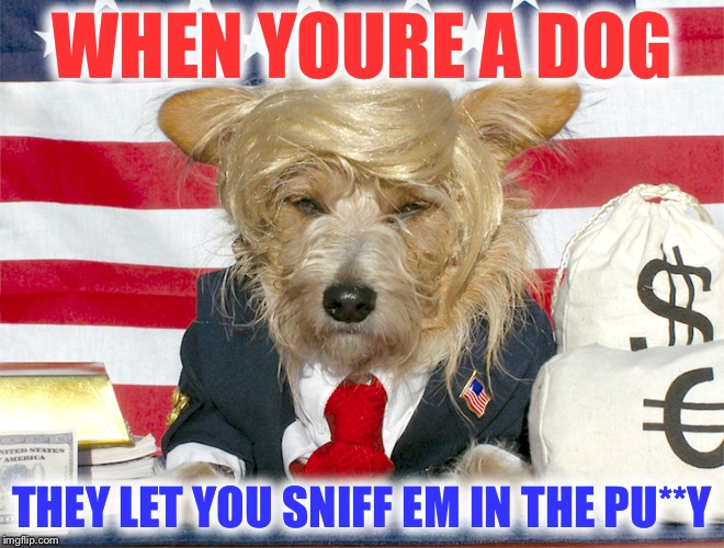WHEN YOURE A DOG THEY LET YOU SNIFF EM IN THE PU**Y | made w/ Imgflip meme maker