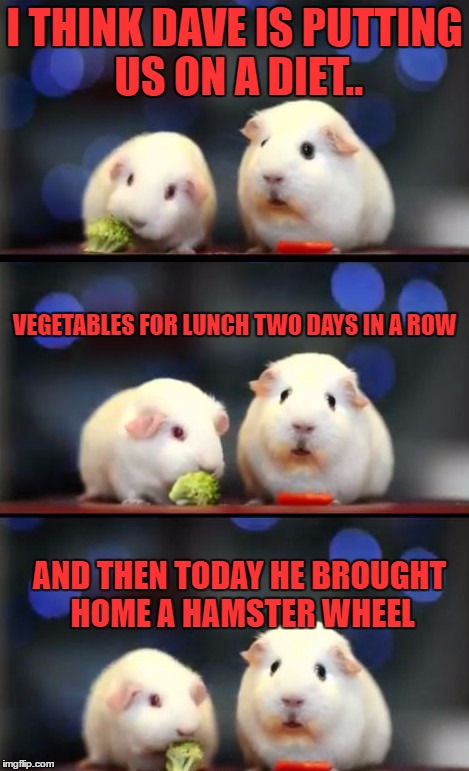 Scared Guinea Pigs~~~An Ozbeck Template~~~ | I THINK DAVE IS PUTTING US ON A DIET.. AND THEN TODAY HE BROUGHT HOME A HAMSTER WHEEL VEGETABLES FOR LUNCH TWO DAYS IN A ROW | image tagged in scared guinea pigs,ozbeck,lynch1979,memes,lolz | made w/ Imgflip meme maker