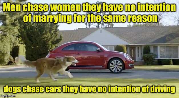 Why do we do it?  (Dog Week) | Men chase women they have no intention of marrying for the same reason dogs chase cars they have no intention of driving | image tagged in dog week | made w/ Imgflip meme maker