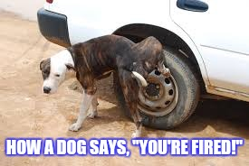 "HOW A DOG SAYS, ""YOU'RE FIRED!"" 