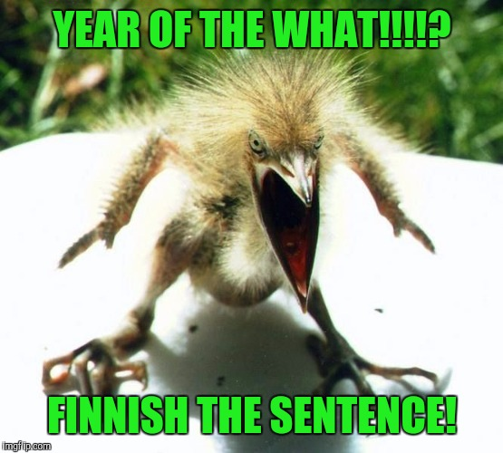 Unpleasant Bird | YEAR OF THE WHAT!!!!? FINNISH THE SENTENCE! | image tagged in unpleasant bird | made w/ Imgflip meme maker