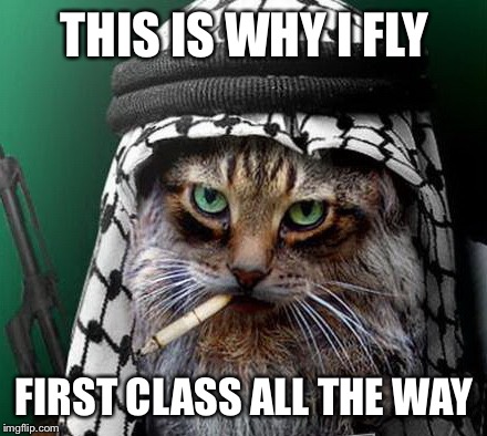 Sarcastic Terrorist Cat | THIS IS WHY I FLY FIRST CLASS ALL THE WAY | image tagged in sarcastic terrorist cat | made w/ Imgflip meme maker