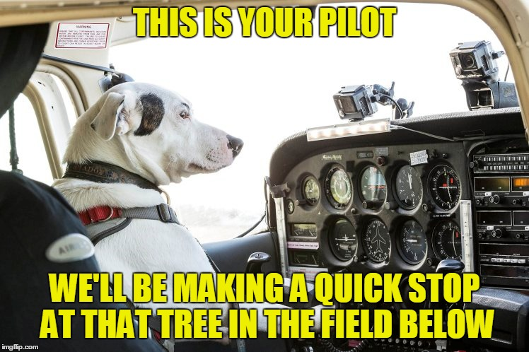 THIS IS YOUR PILOT WE'LL BE MAKING A QUICK STOP AT THAT TREE IN THE FIELD BELOW | made w/ Imgflip meme maker