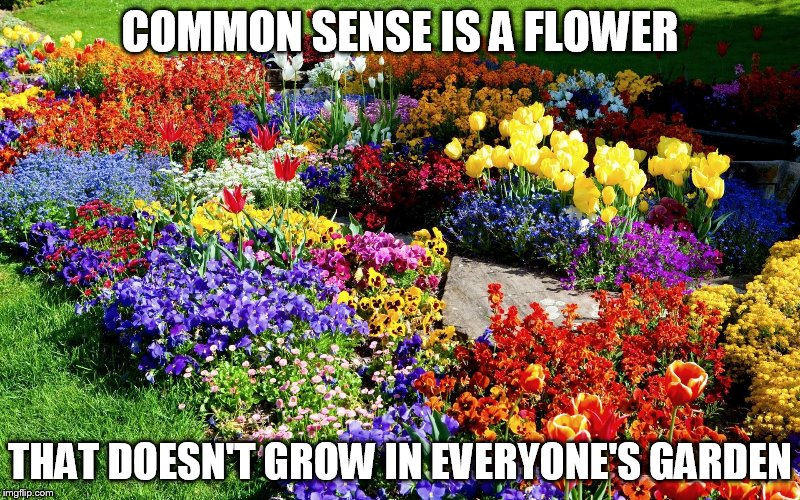 COMMON SENSE IS A FLOWER THAT DOESN'T GROW IN EVERYONE'S GARDEN | image tagged in flower garden | made w/ Imgflip meme maker