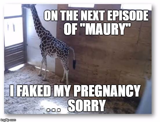 "April on Maury |  ON THE NEXT EPISODE; OF ""MAURY""; I FAKED MY PREGNANCY . . .   SORRY 