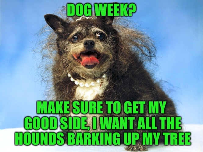 Capture my good side | DOG WEEK? MAKE SURE TO GET MY GOOD SIDE, I WANT ALL THE HOUNDS BARKING UP MY TREE | image tagged in ugly dog,dogs,animals,dog week,tigerleo,hounds | made w/ Imgflip meme maker